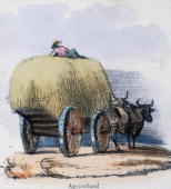 Vignette from a lithographic plate showing a farm worker lying on top of a haywagon led by two oxen Taken from 'The Bull Cow and Calf' in 'Graphic...