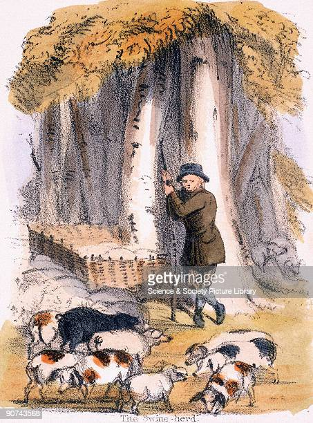 Vignette from a lithographic plate showing a herdsman with his pigs Other pigs ar fenced into a paddock under the trees Taken from 'The Pig' in...