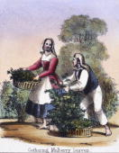 Vignette from a lithographic plate showing a man and a woman gathering mulberry leaves The scene is probably set in Italy Taken from 'The SilkWorm'...