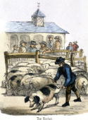 Vignette from a lithographic plate showing a man with pigs at a market Taken from 'The Pig' in 'Graphic Illustrations of Animals Showing Their...