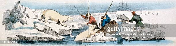 Vignette from a lithographic plate showing a polar bear being hunted by a group of men Taken from 'The Bear' in 'Graphic Illustrations of Animals...