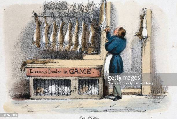 Vignette from a lithographic plate showing a row of dead rabbits hanging up at a butcher�s stall and live caged rabbits Taken from 'The Hare and...