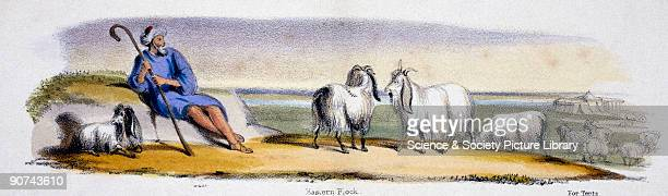Vignette from a lithographic plate showing a shepherd with goats Taken from 'The Goat' in 'Graphic Illustrations of Animals Showing Their Utility to...