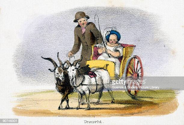 Vignette from a lithographic plate showing a small twowheeled child�s gig drawn by a pair of goats Taken from 'The Goat' in 'Graphic Illustrations of...