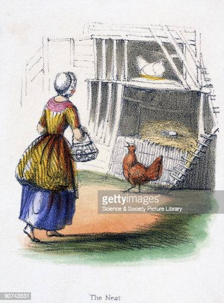 Vignette from a lithographic plate showing a woman collecting eggs Taken from 'Domestic Fowls' in 'Graphic Illustrations of Animals Showing Their...
