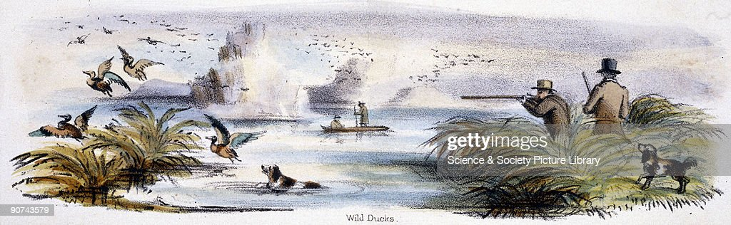Vignette from a lithographic plate showing hunters shooting wild ducks Taken from 'The Swan Goose and Duck' in 'Graphic Illustrations of Animals...