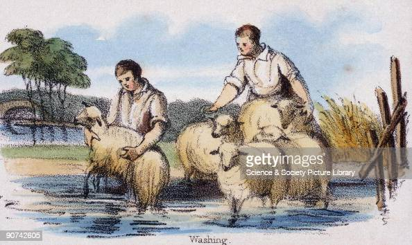 Vignette from a lithographic plate showing men dippng sheep Taken from 'The Sheep' in 'Graphic Illustrations of Animals Showing Their Utility to Man...