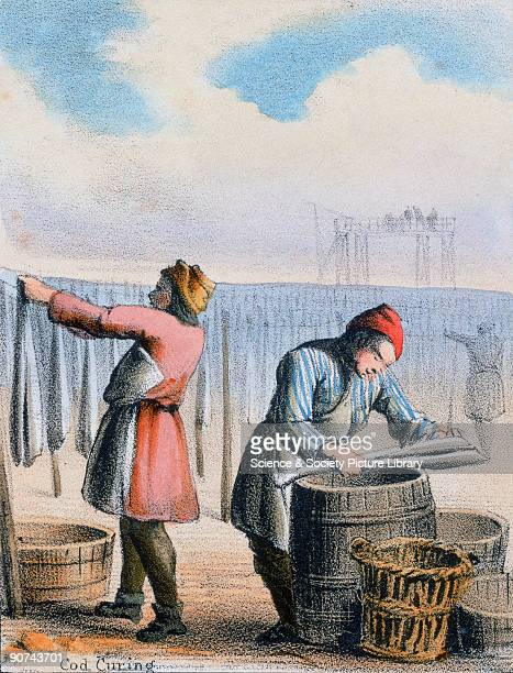 Vignette from a lithographic plate showing men filleting cod dipping them in brine and hanging ithemup to dry Taken from 'The Fish' in 'Graphic...