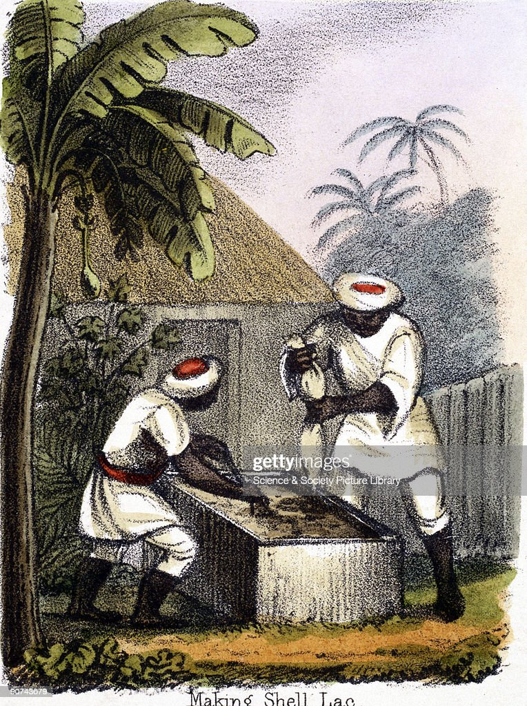 Vignette from a lithographic plate showing people processing shellac Shellac is produced from the secretions of small insects which live on acacia...