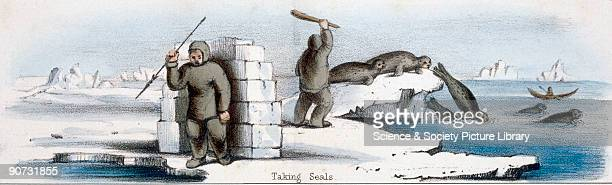 Vignette from a lithographic plate showing seal culling Taken from �The Seal and the Walrus� in 'Graphic Illustrations of Animals showing their...