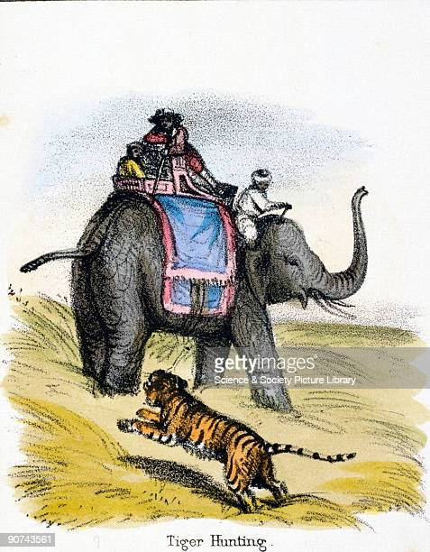 Vignette from a lithographic plate showing three men on an elephant hunting a tiger Taken from 'The Elephant' in 'Graphic Illustrations of Animals...