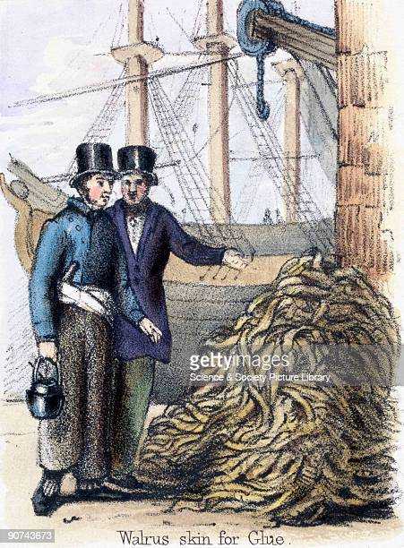Vignette from a lithographic plate showing two men standing beside a pile of walrus skins possibly discussing a price for the catch Taken from 'The...