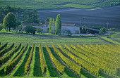 vignoble des coteaux de Saintonge produisant le cognac et le pineau