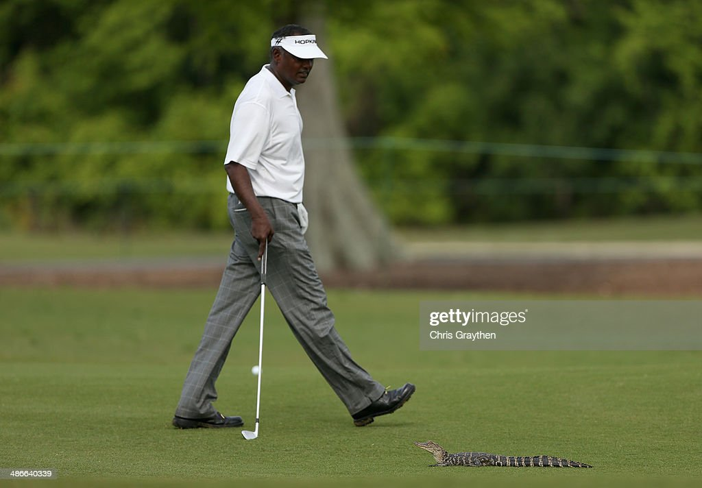 <a gi-track='captionPersonalityLinkClicked' href=/galleries/search?phrase=Vijay+Singh&family=editorial&specificpeople=179484 ng-click='$event.stopPropagation()'>Vijay Singh</a> has a run in with a baby alligator while trying to take his shot on the 7th during Round Two of the Zurich Classic of New Orleans at TPC Louisiana on April 25, 2014 in Avondale, Louisiana.