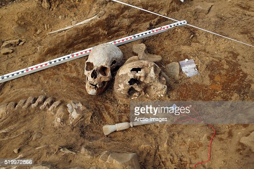 viking era human skeletal remains at archaeological site stock, Skeleton