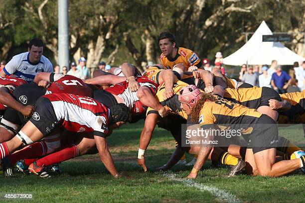 Vikings and Eagles players in a scrum during the round two NRC match between NSW Country Eagles and UC Vikings at Woolhara Oval on August 29 2015 in...