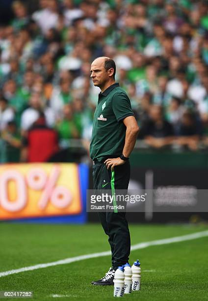 Viktor Skripnik head coach of Bremen reacts during the Bundesliga match between Werder Bremen and FC Augsburg at Weserstadion on September 11 2016 in...