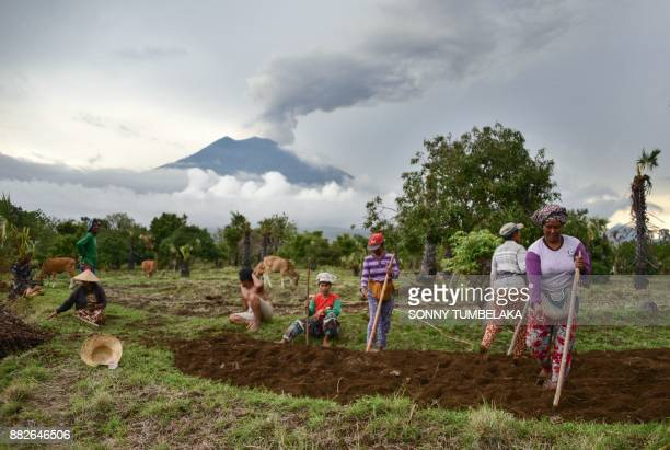 Vilagers work in a field before Mount Agung in Karangasem on Indonesia's resort island of Bali on November 30 2017 Thousands of foreign tourists were...