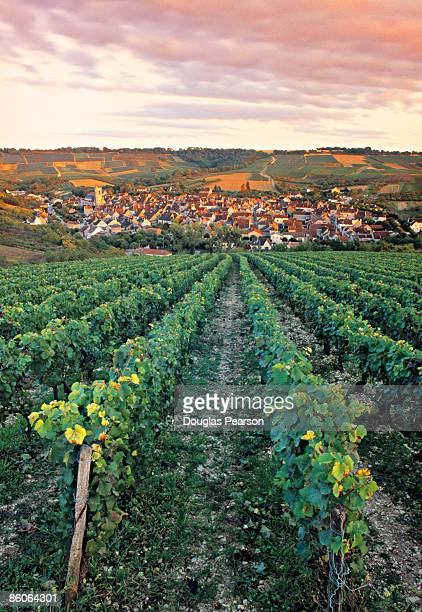 Village and farmland , Irancy , Burgundy , France