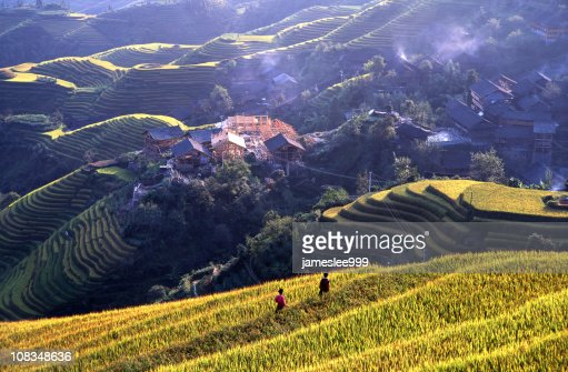 Village And Rice Paddy