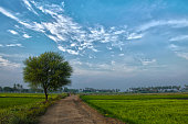 Beautiful cultivation field with a tree and beautiful blue sky