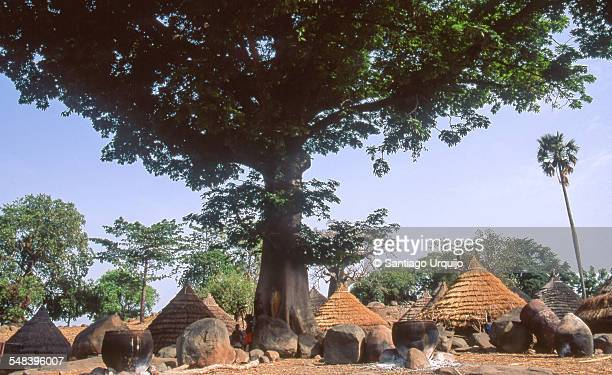 Village of Iwol underneath a giant tree