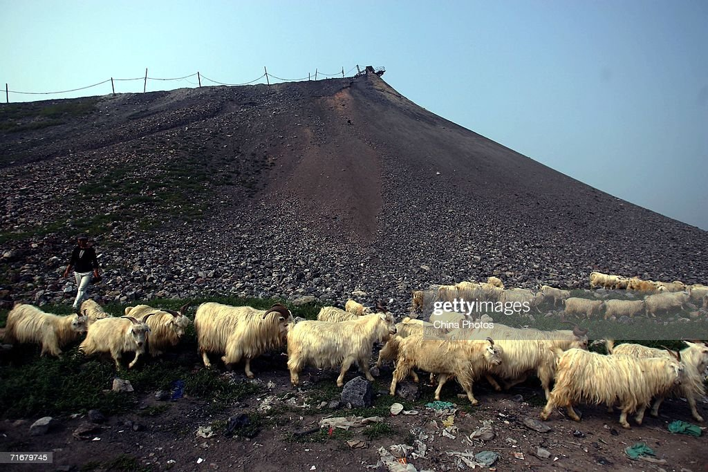 A villager herds sheep near a gangue stockpiles at a coal-chosen factory on August 10, 2006 in Chifeng of Inner Mongolia Autonomous Region, China. Pingzhuang Coal Groups Company, including six open pit coal mines, produces 10 million tons per year. Reportedly, in the first four months of this year, China's coal consumption rose by 13.8 percent over the same period of last year, and coal price is expected to go up steadily with the factors of environment, safety and resources included in the cost of coal production.