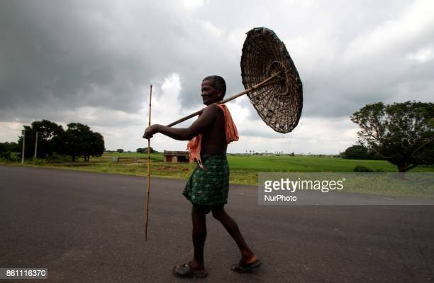 A villager holds his hand made traditional umbrella and walks on the village road as he keep watches towards cattle grazzing in the green field...