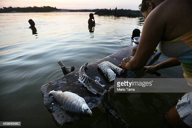 A villager prepares fish on the Tapajos River near where a series of 'Caravan of Resistance' protests were staged by indigenous groups and supporters...