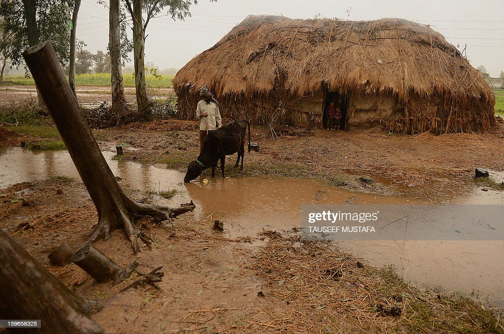 A villager takes his cow to water outside a mud house during a rain shower along the India-Pakistan border in Suchit-Garh, 36 kms southwest of Jammu on January 18, 2013. On both sides of the de facto border in Kashmir, villagers living on one of the world's most dangerous flashpoints have special reason to fear the return of tension between India and Pakistan. AFP PHOTO/Tauseef MUSTAFA