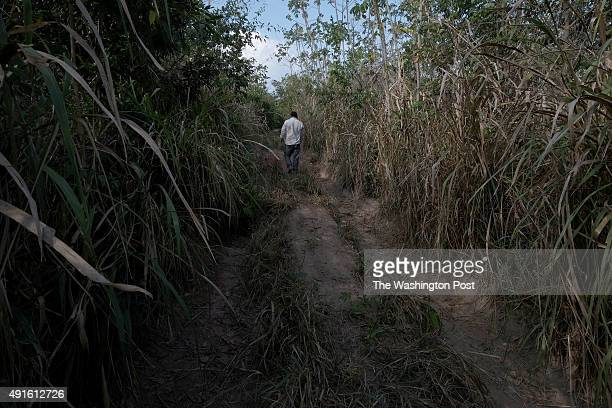 A villager walks down a road that became too difficult to travel by 4wd in the Araribóia Indigenous Reserve Maranhão Brazil on August 7 2015 Loggers...