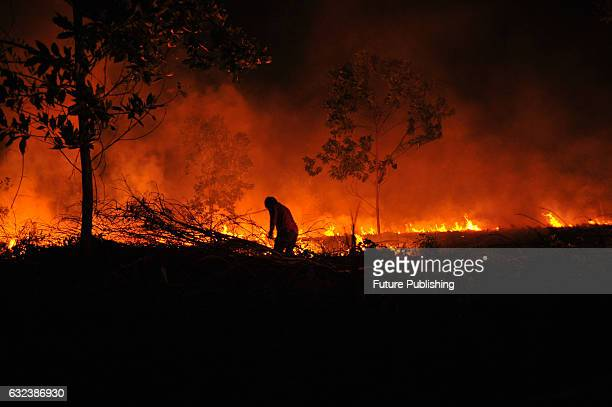 Villagers attempt to extinguish a fire burning through forests and plantations at Payung Sekaki District on January 18 2017 in Riau Indonesia Air...