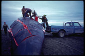 Villagers Butchering a Bowhead Whale