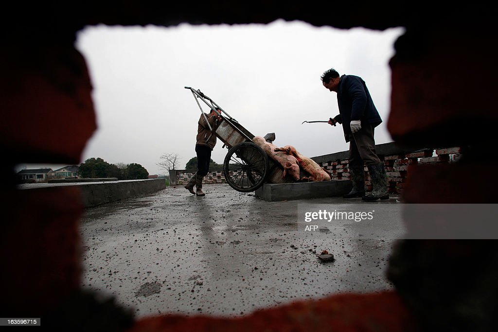 Villagers dumps dead pigs into a decontamination storage built on a farmland in a town in Jiaxing municipality, east China's Zhejiang province on March 13, 2013. The number of dead pigs found in Shanghai's main river has doubled in two days to nearly 6,000, the government said, as residents worried over the water supply questioned the handling of the incident. Shanghai has pointed the finger at Jiaxing in the neighbouring province of Zhejiang, a major centre for hog-raising, but officials from the area sought to deny it was the source. CHINA