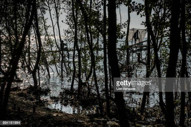 Villagers fishing at the land which has been sinking below sea level at Bedono village on June 7 2017 in Demak Indonesia Indonesia is known to be one...