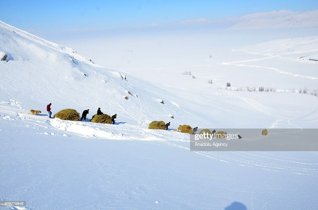Villagers in the Yuksekova district use sleds on a snowy hill as they return home together with hay bales they collected to feed their animals in summer in Hakkari, Turkey on February 12, 2016.