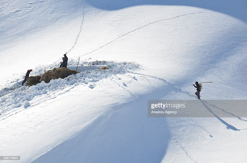 Villagers in the Yuksekova district walk on a snowy hill as they return home together with hay bales they collected to feed their animals in summer in Hakkari, Turkey on February 12, 2016.