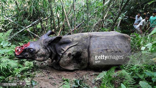 Villagers look at a wounded endangered one horned Rhinoceros that was shot and dehorned by poachers in the jungle of Parku hills near Kaziranga...