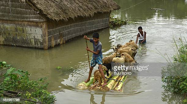 Villagers take their sheep on a banana raft to a safer place at the flood affected Buraburi village in the Morigaon district of north eastern Assam...