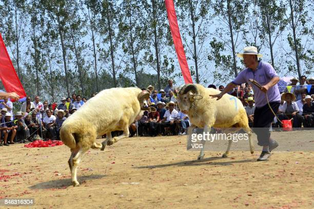 Villagers watch a goat fight at Yanggu County on September 12 2017 in Liaocheng Shandong Province of China Over 200 goats from about 20 counties...