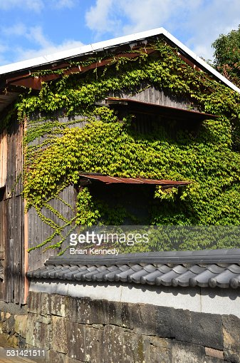 Vine Covered Hagi Shed