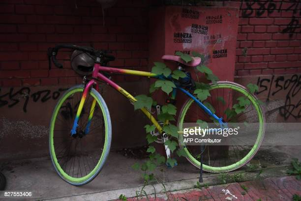 A vine grows through a parked bicycle outside an apartment building in Beijing on August 8 2017 / AFP PHOTO / GREG BAKER