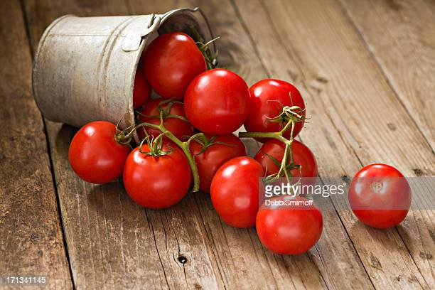 Vine Ripe Tomatoes In A Bucket