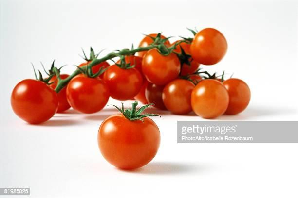 Vine tomatoes, close-up