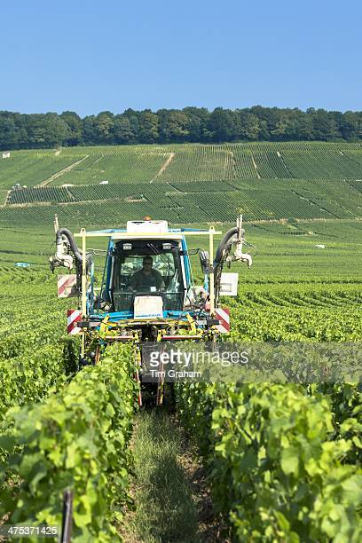 Vine tractor trimming grapevines along the Champagne Tourist Route in Vertus the Marne Valley ChampagneArdenne France