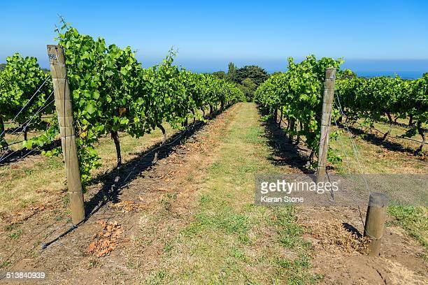 Vine trail