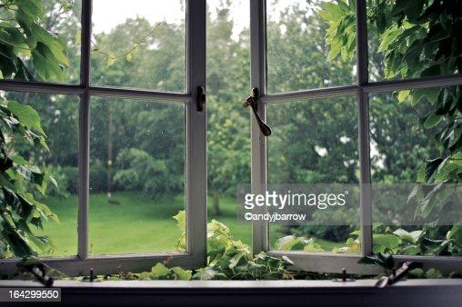 Vines around an old ajar window