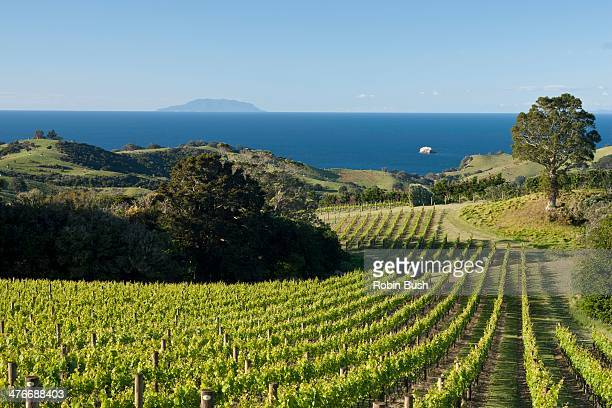 Vines from Man O War Road, Waiheke Island