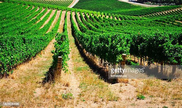 Vineyard Adelaide Hills South Australia