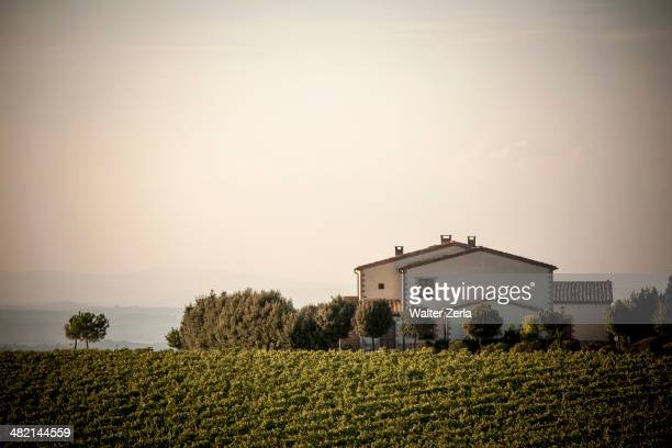 Vineyard and house in rural landscape